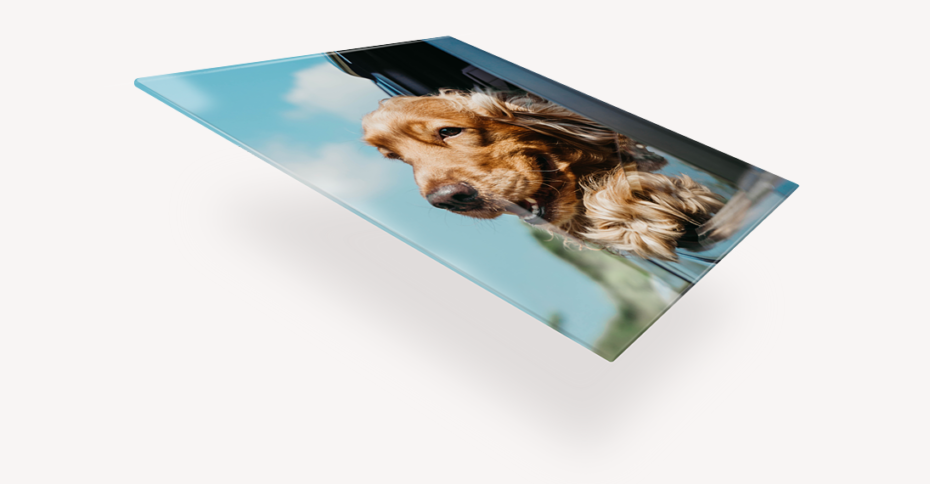 adding white ink to bright up glass print of dog hanging out car window